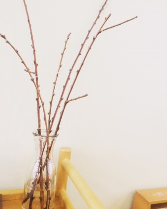 桃の花0308