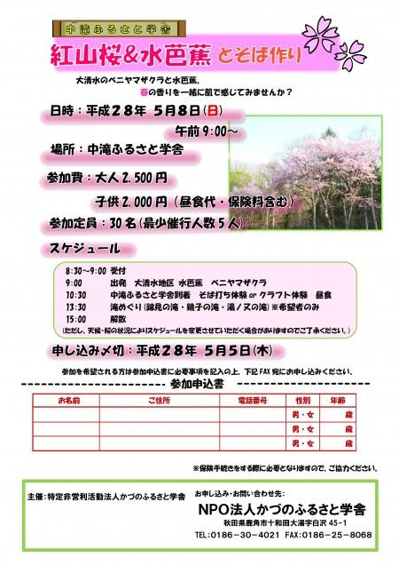 Microsoft Word - 平成28月5月紅山桜&水芭蕉とそば作りチラシ